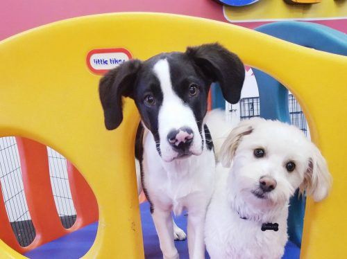 Making friends in dog daycare and boarding